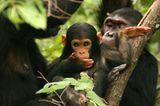 Ein Leben für den Naturschutz - Bild 6