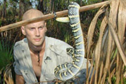 Taipan, die gefährlichste Schlange der Welt