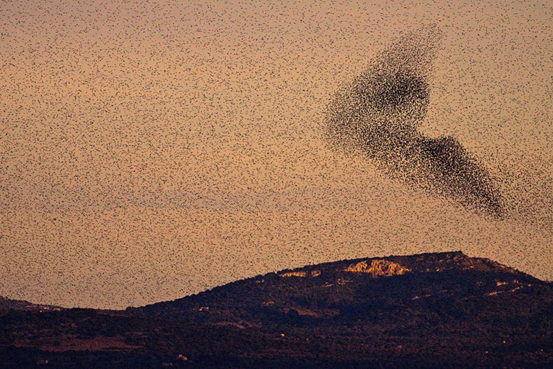 Vogelschwarm auf Mallorca