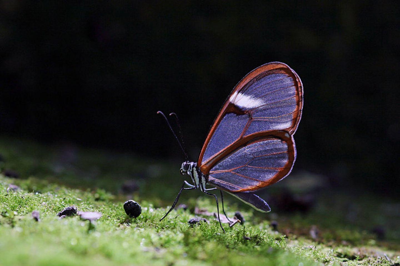 Schmetterling auf bemoostem Stein