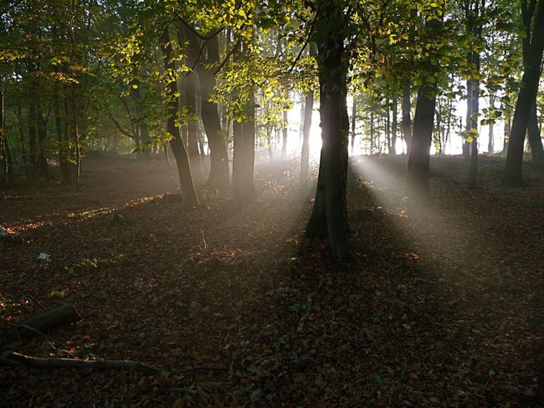 Herbstlicher Laubwald im Morgenlicht