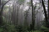 Nationalpark Monteverde, Costa Rica