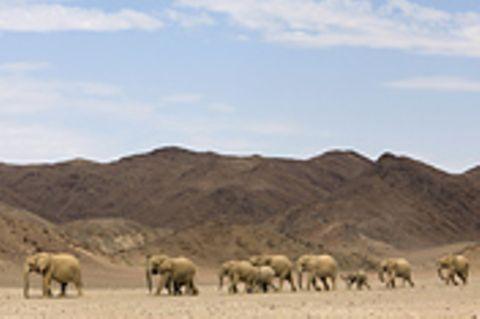 Fotogalerie: Fotogalerie: Afrikas letzte Wildnis