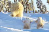 Fotostrecke Eisbären: Familienglück im Schnee - Bild 8