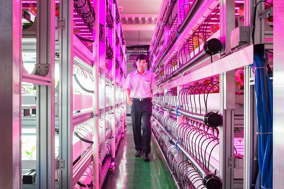 Vertical Farming: Der Bauernhof im Hochhaus
