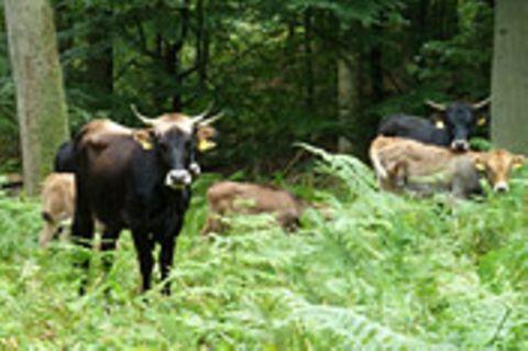 Forstwirtschaft: Der Mittelalter-Wald im Solling
