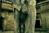 Fotogalerie: Fotogalerie: Indien - Bild 5