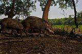 Artenschutz: Wo darf der Jaguar leben? - Bild 5