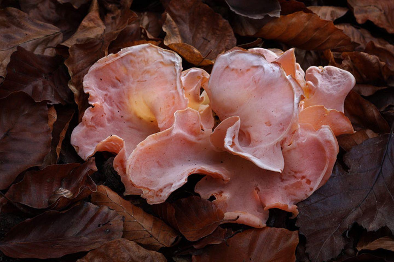Fotogalerie: Fotogalerie: Zauberhafte Pilze - Bild 9