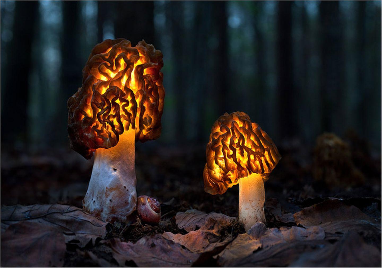 Fotogalerie: Fotogalerie: Zauberhafte Pilze - Bild 10