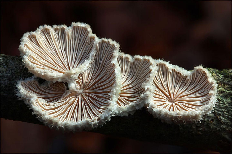 Fotogalerie: Fotogalerie: Zauberhafte Pilze - Bild 12