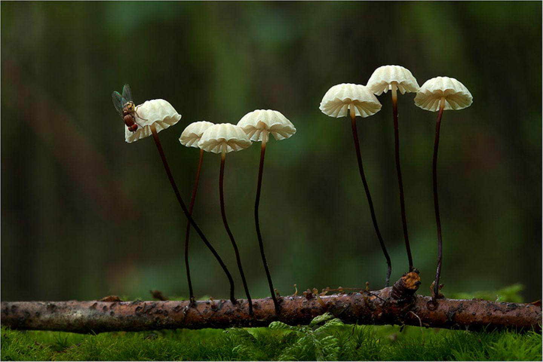 Fotogalerie: Fotogalerie: Zauberhafte Pilze - Bild 15