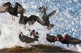 Fotogalerie: Die besten Naturfotografien 2011 - Bild 2