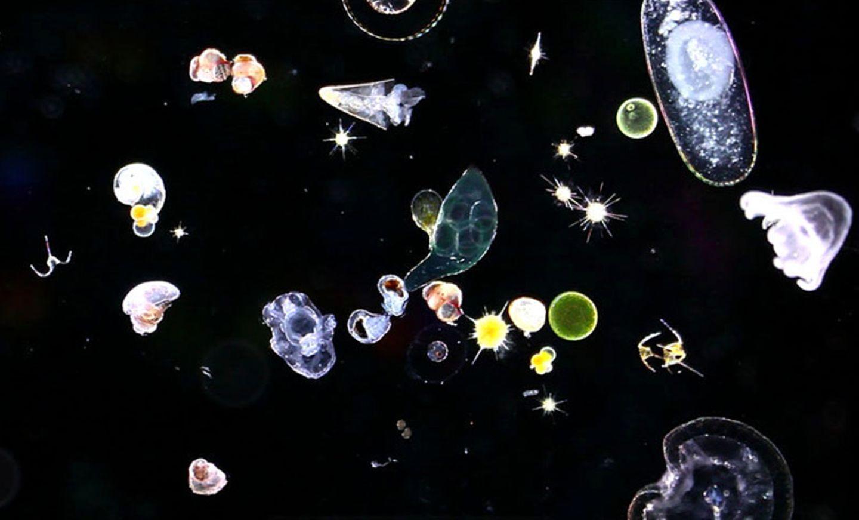 Mikroskopisch kleine Organismen
