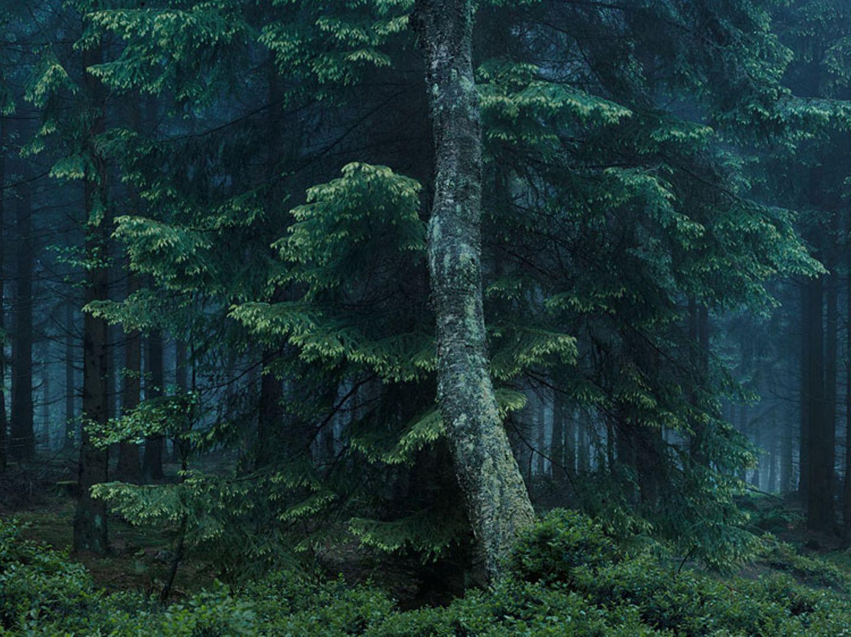 Waldraum