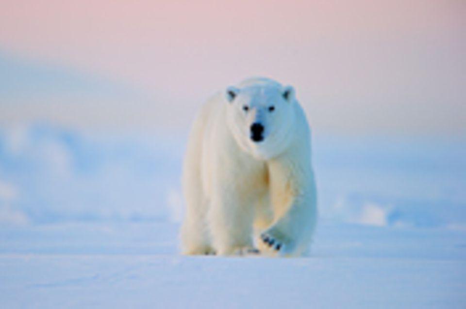 Fotogalerie: Faszination Arktis