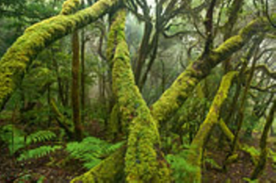 Fotogalerie: Fotogalerie: Europas wilde Wälder