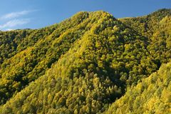 Europas wilde Wälder