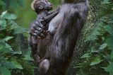 """Naturfilm: Tierdoku: """"Unser Leben"""" - Bild 6"""