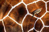 Fotogalerie: Fotogalerie: Tierfotografie als Kunst