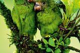 Fotogalerie: Fotogalerie: Tierfotografie als Kunst - Bild 3