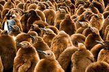 Fotogalerie: Fotogalerie: Tierfotografie als Kunst - Bild 8