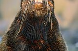 Fotogalerie: Fotogalerie: Tierfotografie als Kunst - Bild 9