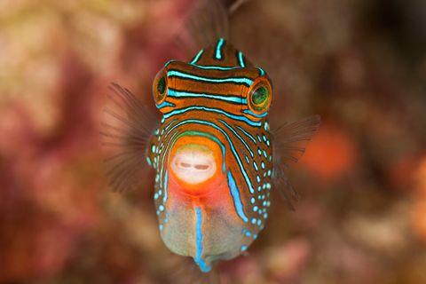 Tierfotografie: Fotogalerie: Gesichter des Riffs