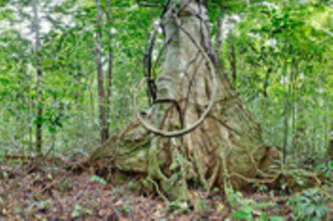 Ausschnitte der Waldbilder von Ralf Darius