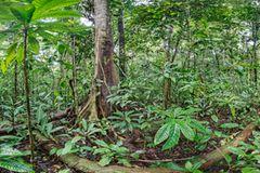 Ausschnitte der Waldbilder von Ralf Darius - Bild 2