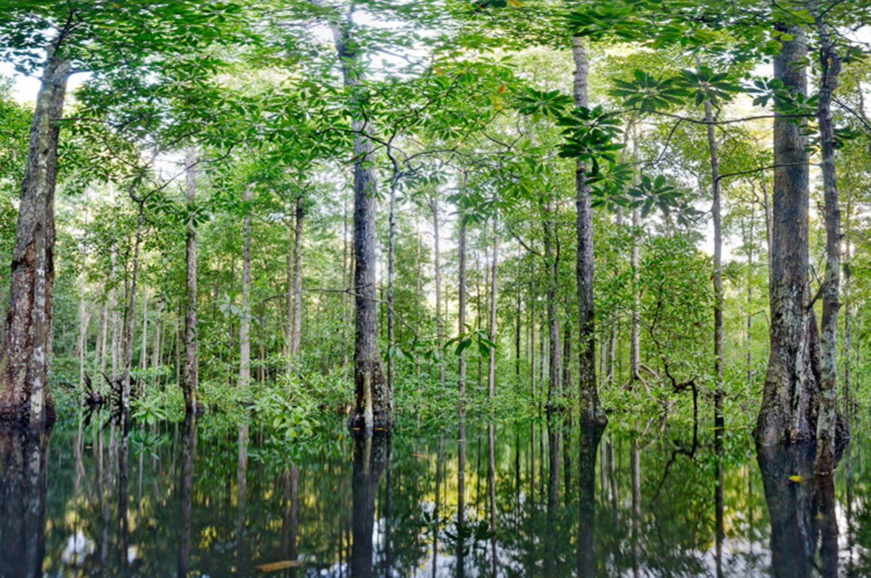 Ausschnitte der Waldbilder von Ralf Darius - Bild 3
