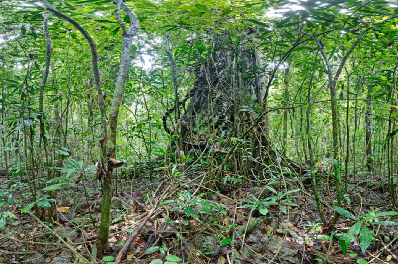 Ausschnitte der Waldbilder von Ralf Darius - Bild 4