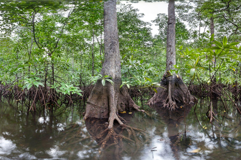 Ausschnitte der Waldbilder von Ralf Darius - Bild 5