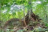 Ausschnitte der Waldbilder von Ralf Darius - Bild 6