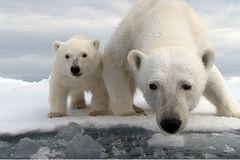 Aug in Aug mit den Eisbären - Bild 2