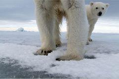 Aug in Aug mit den Eisbären - Bild 3