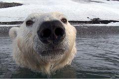 Aug in Aug mit den Eisbären - Bild 4
