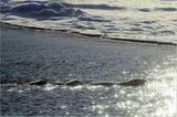 Aug in Aug mit den Eisbären - Bild 5