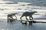 Aug in Aug mit den Eisbären - Bild 6