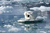 Aug in Aug mit den Eisbären - Bild 7