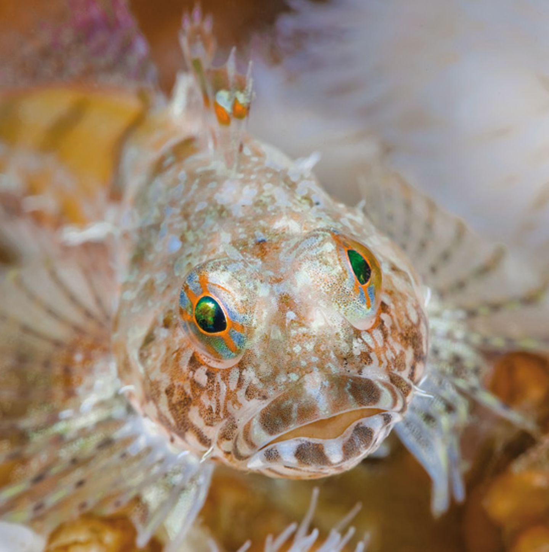 Unterwasserfotografie: Fotogalerie: Leben im Nordpazifik