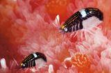 Unterwasserfotografie: Fotogalerie: Leben im Nordpazifik - Bild 5