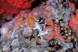 Unterwasserfotografie: Fotogalerie: Leben im Nordpazifik - Bild 7