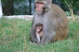 Fotogalerie: Tierkinder - Bild 2