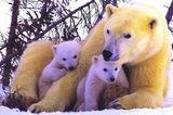 Fotogalerie: Tierkinder - Bild 5