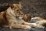 Fotogalerie: Tierkinder - Bild 8