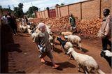 Fotostrecke: Unicef Burundi: Médick und seine Beschützer - Bild 8