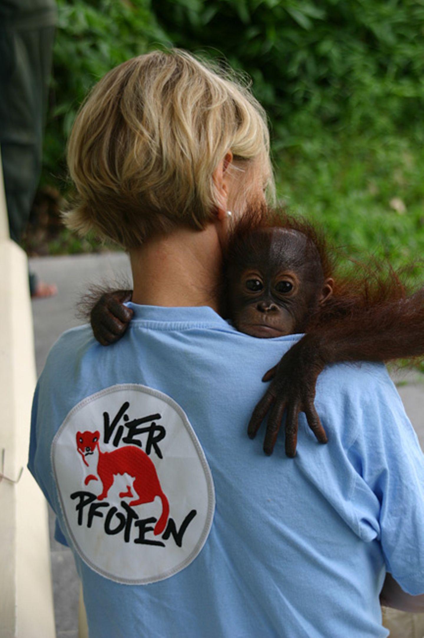 Orang-Utans: Zurück in die Freiheit - Bild 2