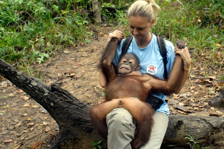 Orang-Utans: Zurück in die Freiheit - Bild 3