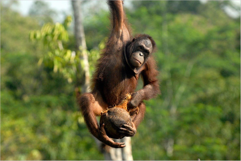 Orang-Utans: Zurück in die Freiheit - Bild 5